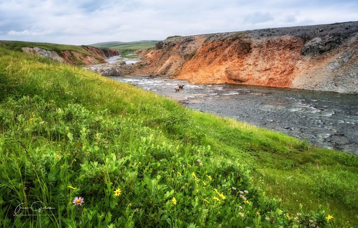 grizzlys-stream-meadow