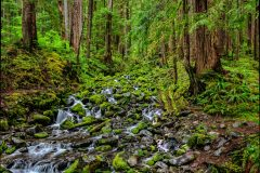 OLYMPIC NP 8