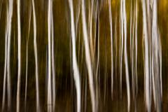 TREES ABSTRACT 2