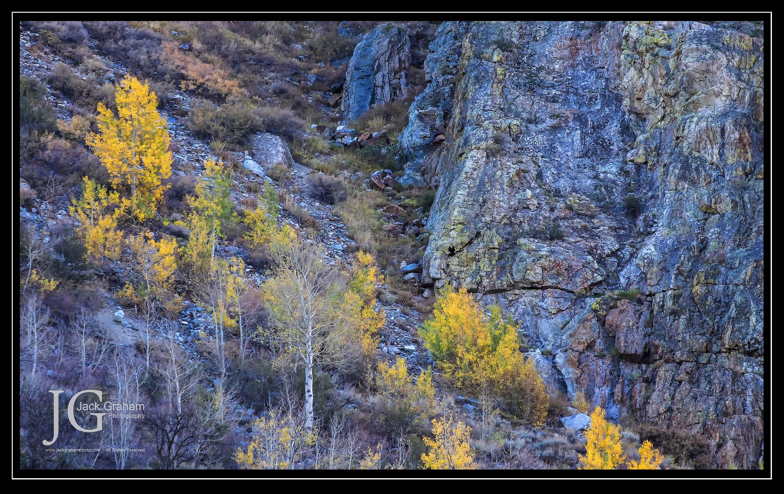 fall color, aspens in eastern sierra