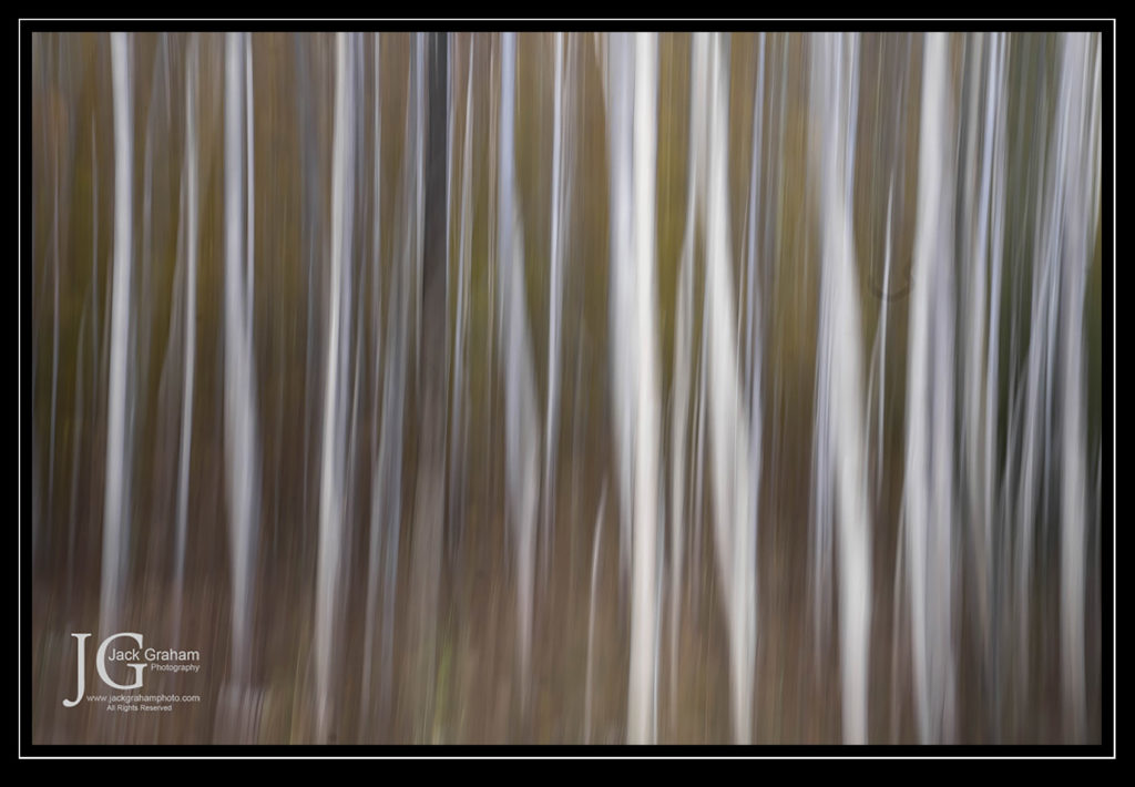 abstract aspens